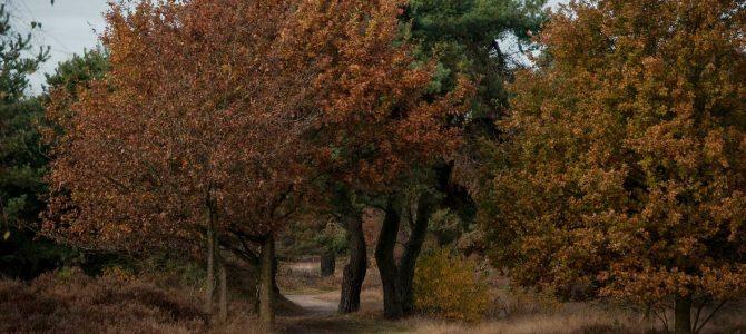 Herfst omgeving Rijssen