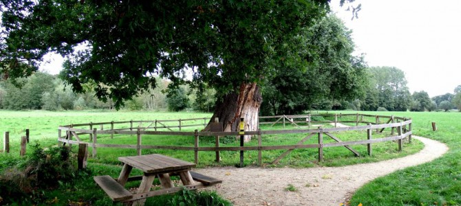 De dikke boom nabij Laren