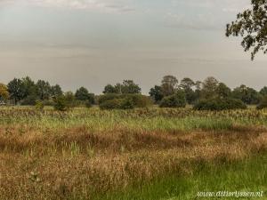 Natuurgebied Overtoom Middelveen (17)