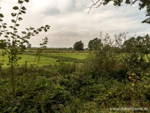Natuurgebied Overtoom Middelveen (38)