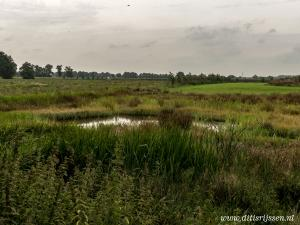 Natuurgebied Overtoom Middelveen (46)