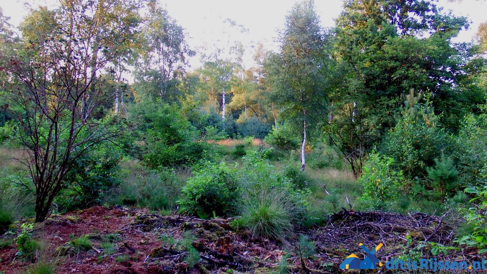 camping de Hoch in Markelo – Alles over Rijssen en omgeving