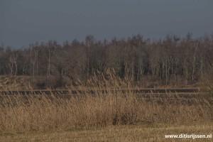 wandelroutes-vuurvogelpad-(21)