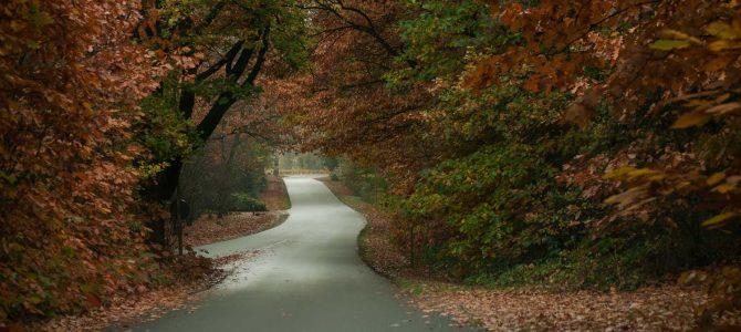 Wandelen Nationaal Park Sallandse Heuvelrug